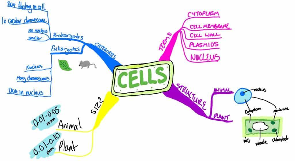 A mindmap of cell biology